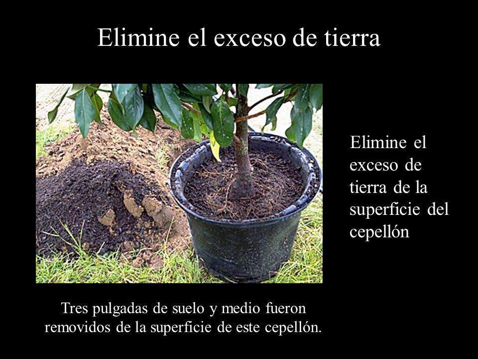 Elimine el exceso de tierra