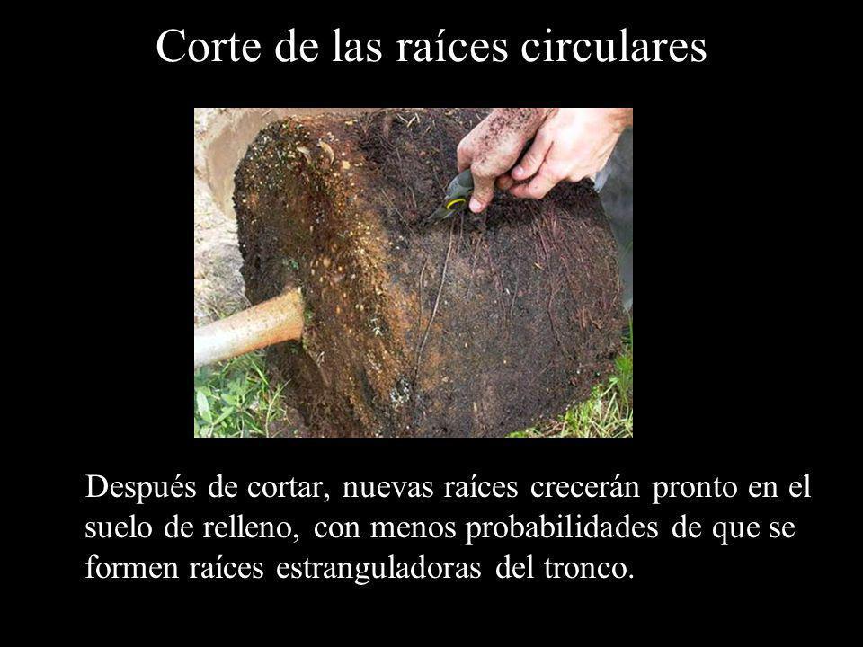 Corte de las raíces circulares