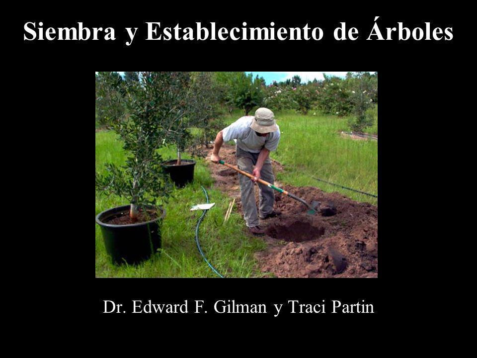 Siembra y Establecimiento de Árboles