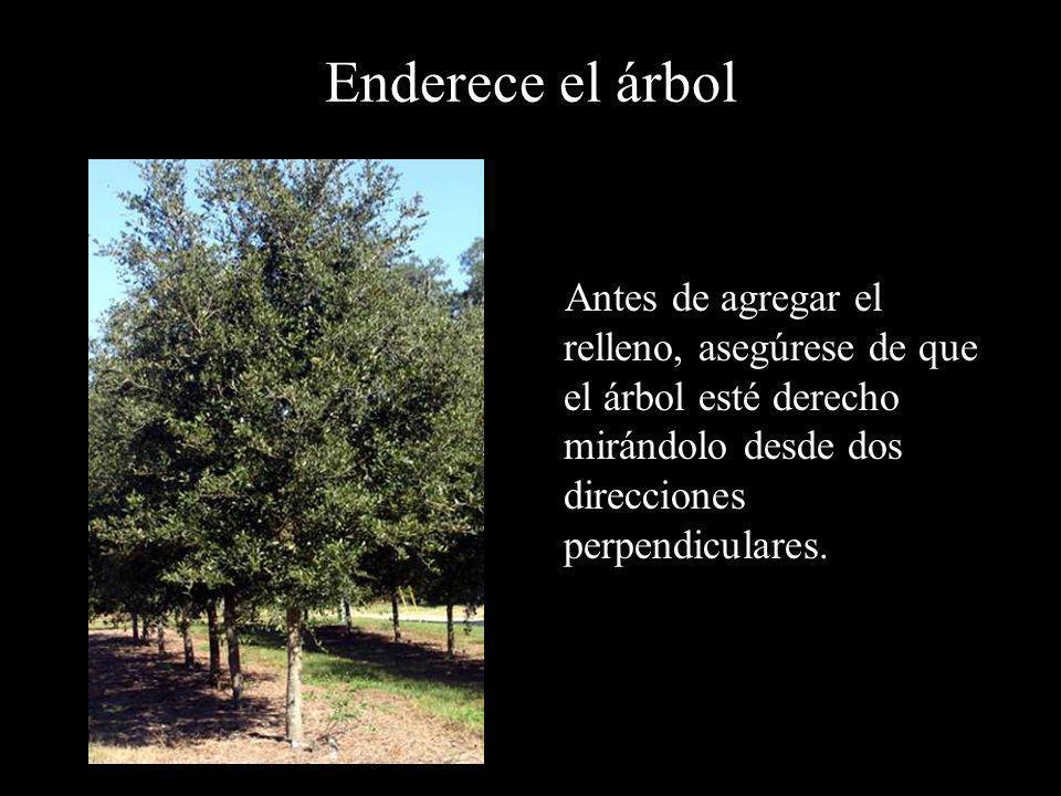 Enderece el árbol Antes de agregar el relleno, asegúrese de que el árbol esté derecho mirándolo desde dos direcciones perpendiculares.