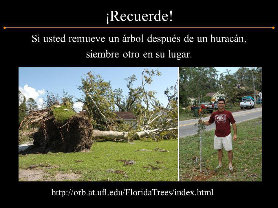 ¡Recuerde! Si usted remueve un árbol después de un huracán,