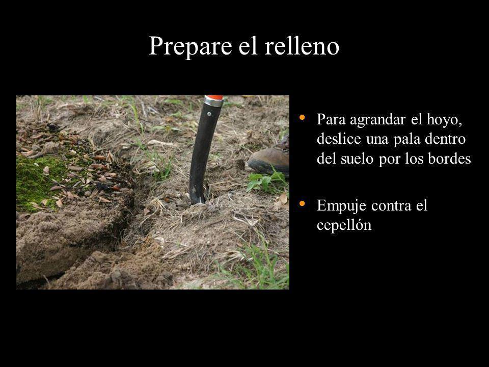 Prepare el relleno Para agrandar el hoyo, deslice una pala dentro del suelo por los bordes. Empuje contra el cepellón.