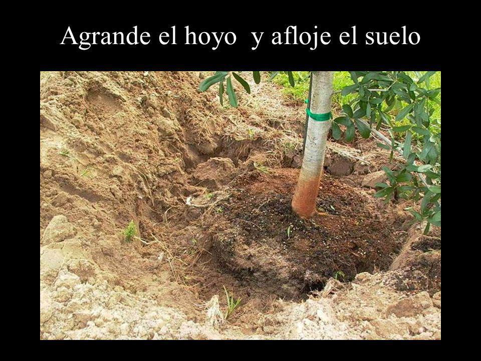 Agrande el hoyo y afloje el suelo