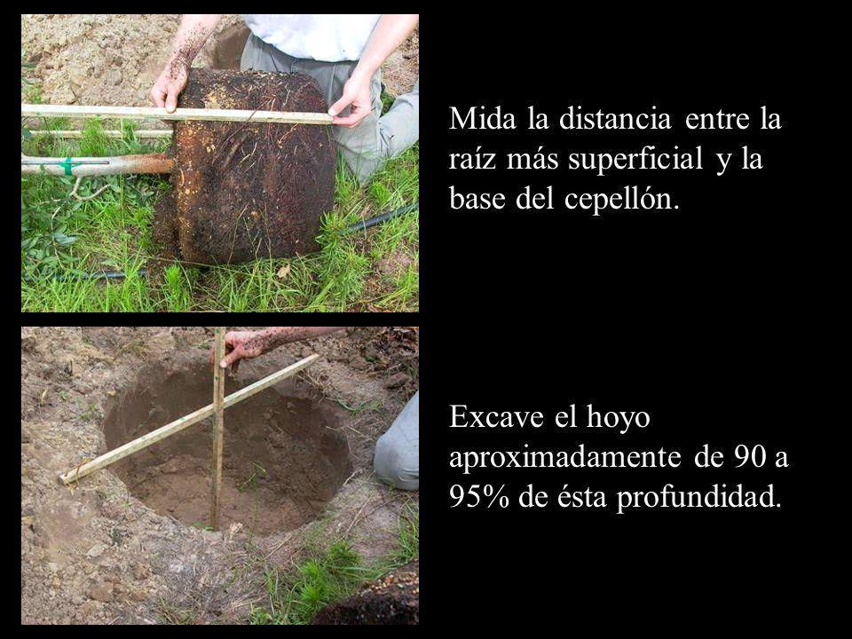Excave el hoyo aproximadamente de 90 a 95% de ésta profundidad.