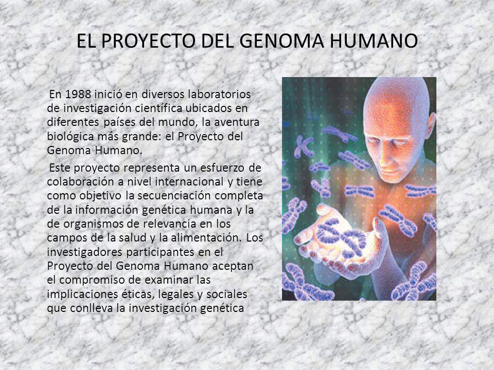 Los seres vivos y el adn de qu est n hechos los seres for En 2003 se completo la secuenciacion del humano
