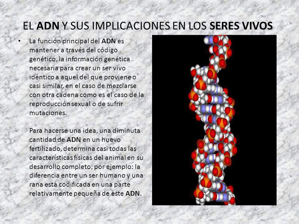 EL ADN Y SUS IMPLICACIONES EN LOS SERES VIVOS