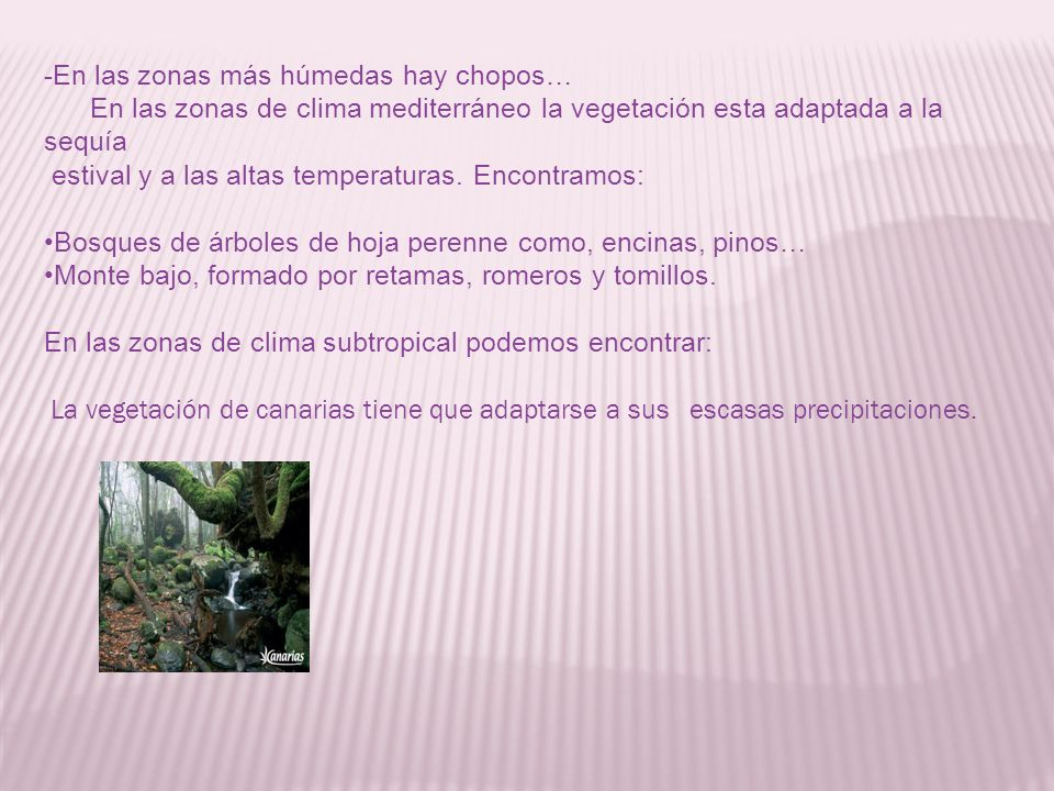 Clima de espa a ppt descargar for Arboles de hoja perenne para clima mediterraneo