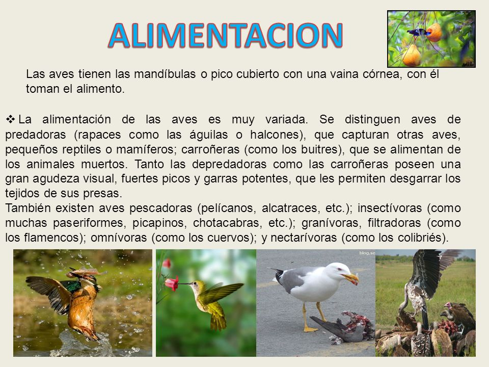 Mundo animal ppt descargar for Alimentacion de los reptiles