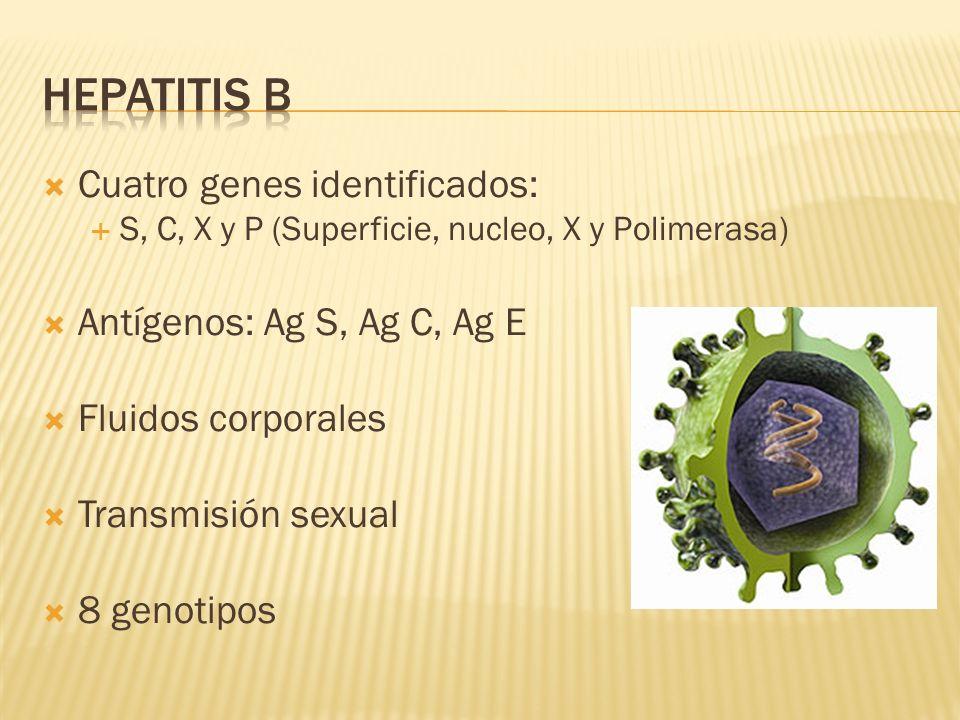 Hepatitis b Cuatro genes identificados: Antígenos: Ag S, Ag C, Ag E