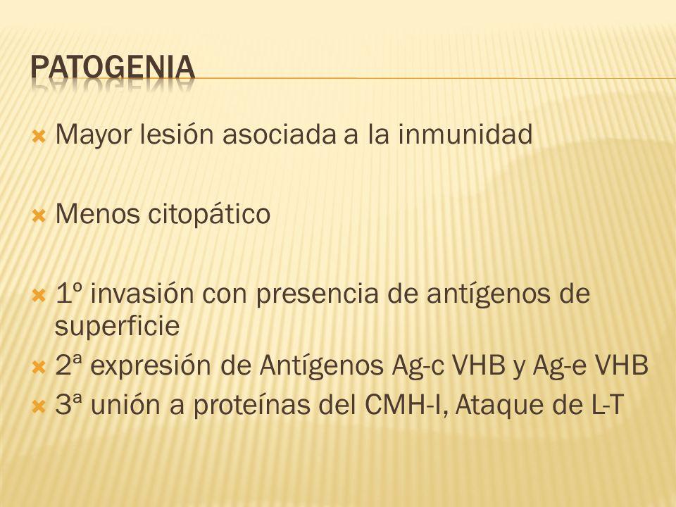 patogenia Mayor lesión asociada a la inmunidad Menos citopático
