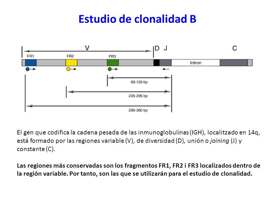 Estudio de clonalidad B