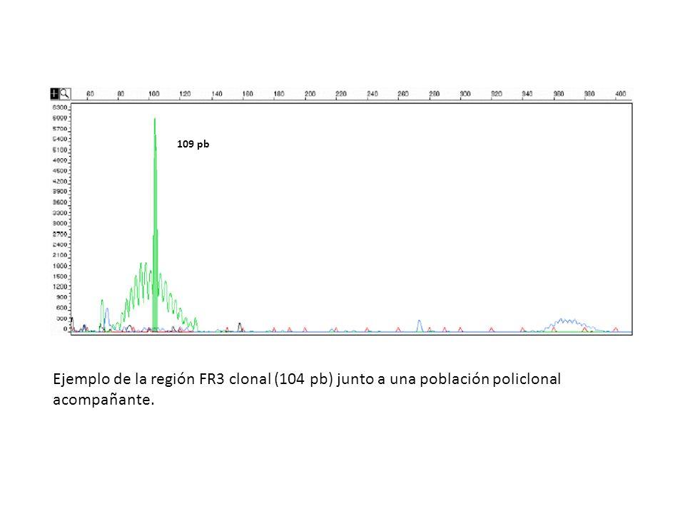 109 pb Ejemplo de la región FR3 clonal (104 pb) junto a una población policlonal acompañante.