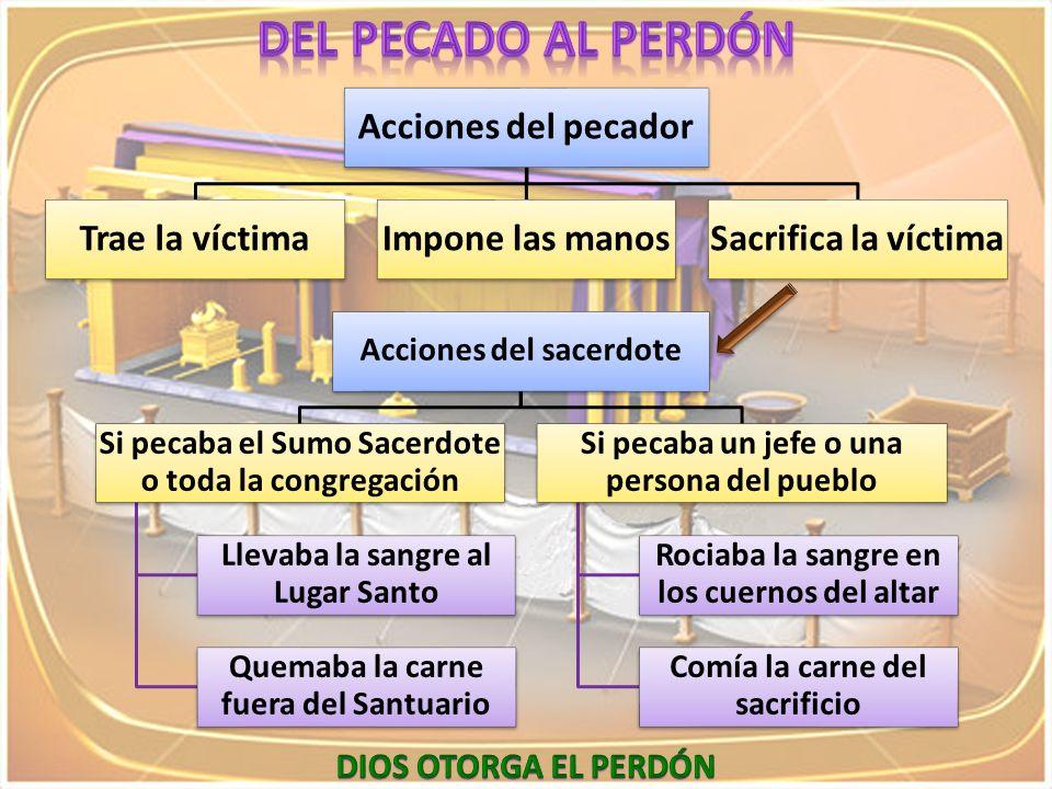 DEL PECADO AL PERDÓN Acciones del pecador Trae la víctima
