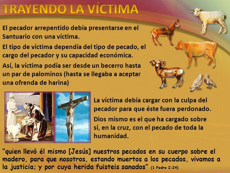 TRAYENDO LA VÍCTIMA El pecador arrepentido debía presentarse en el Santuario con una víctima.