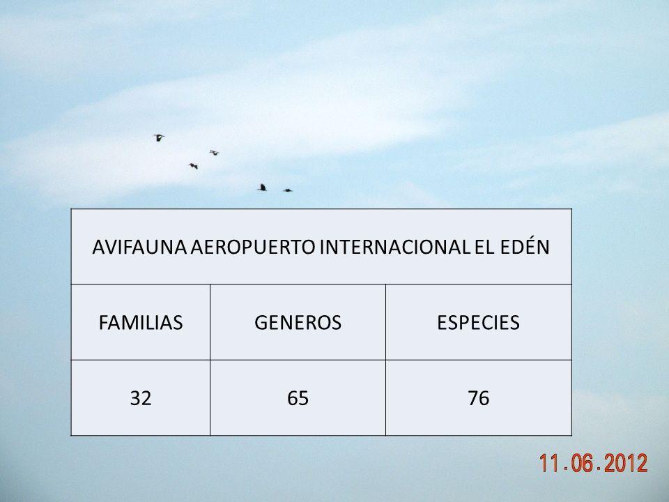AVIFAUNA AEROPUERTO INTERNACIONAL EL EDÉN