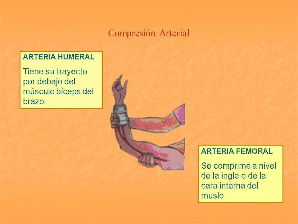 Compresión Arterial ARTERIA HUMERAL. Tiene su trayecto por debajo del músculo bíceps del brazo. ARTERIA FEMORAL.