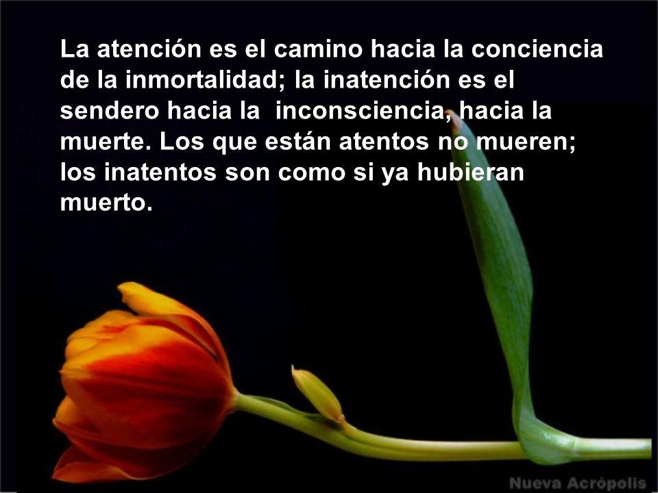 La atención es el camino hacia la conciencia de la inmortalidad; la inatención es el sendero hacia la inconsciencia, hacia la muerte.