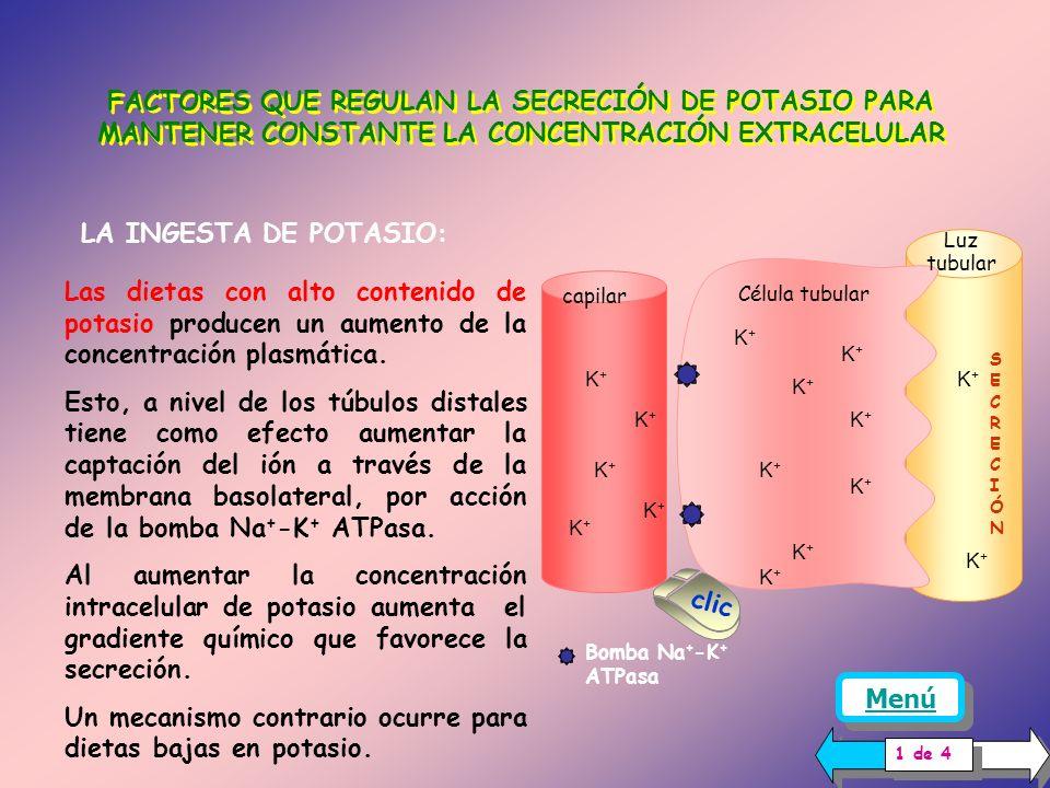 Un mecanismo contrario ocurre para dietas bajas en potasio.