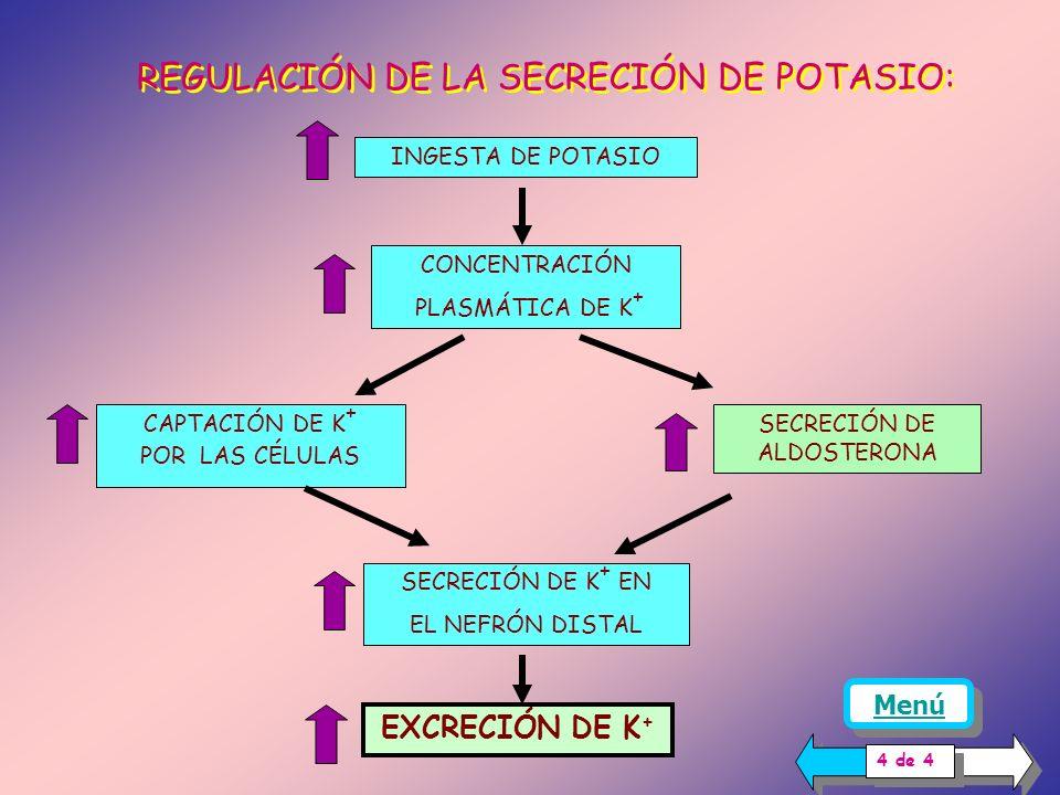 REGULACIÓN DE LA SECRECIÓN DE POTASIO: