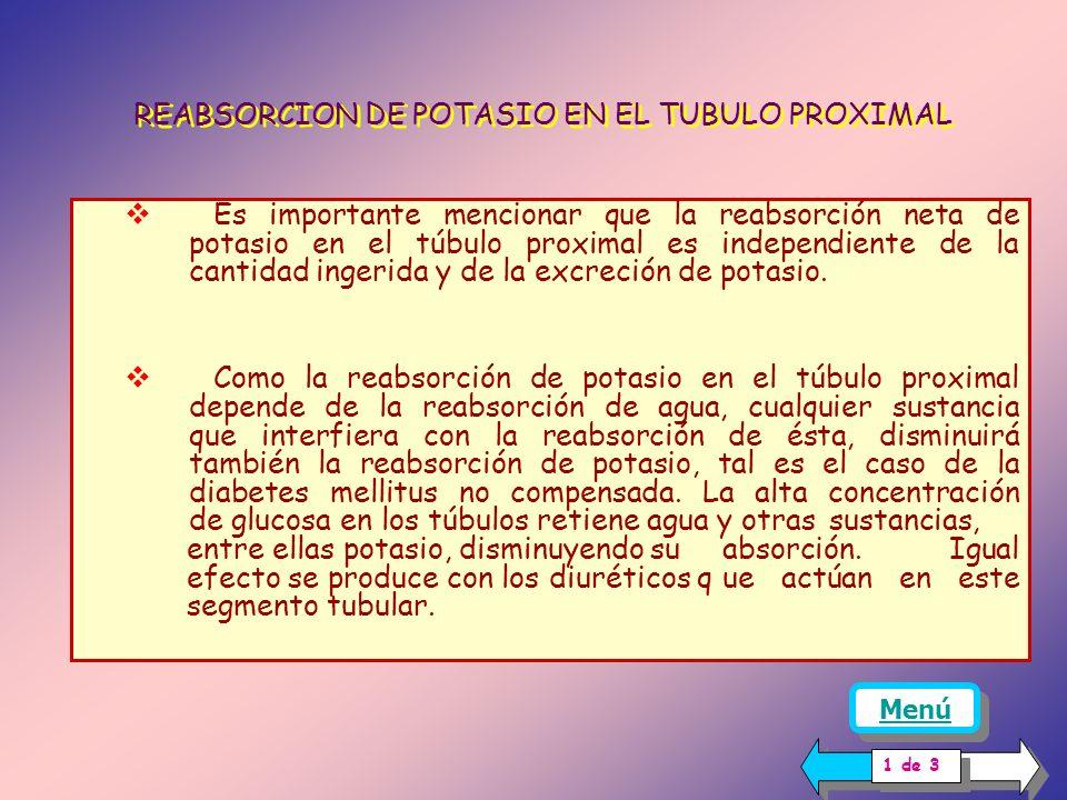 REABSORCION DE POTASIO EN EL TUBULO PROXIMAL