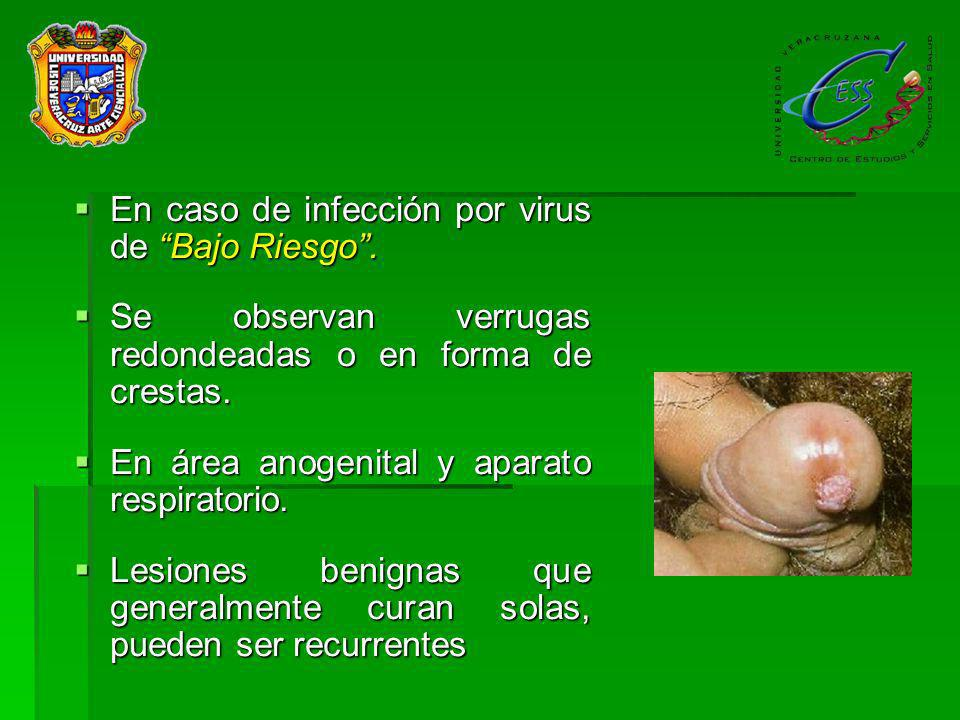 En caso de infección por virus de Bajo Riesgo .
