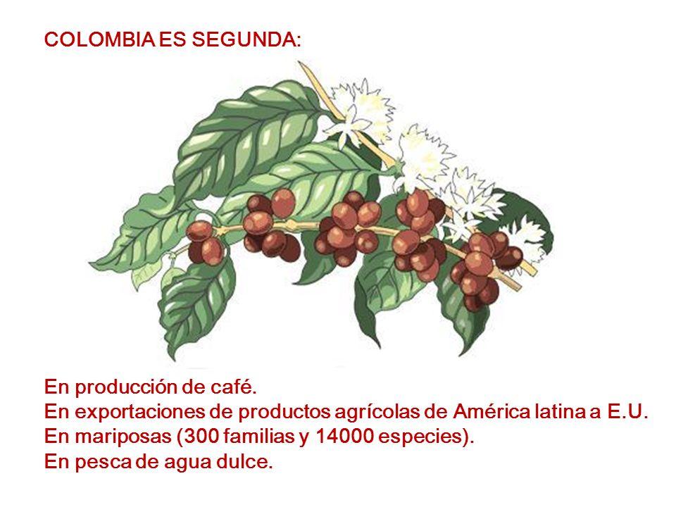 COLOMBIA ES SEGUNDA: En producción de café. En exportaciones de productos agrícolas de América latina a E.U.