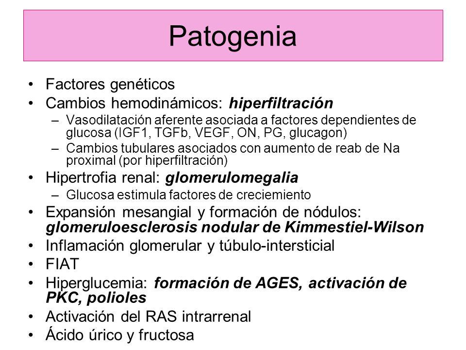 Patogenia Factores genéticos Cambios hemodinámicos: hiperfiltración