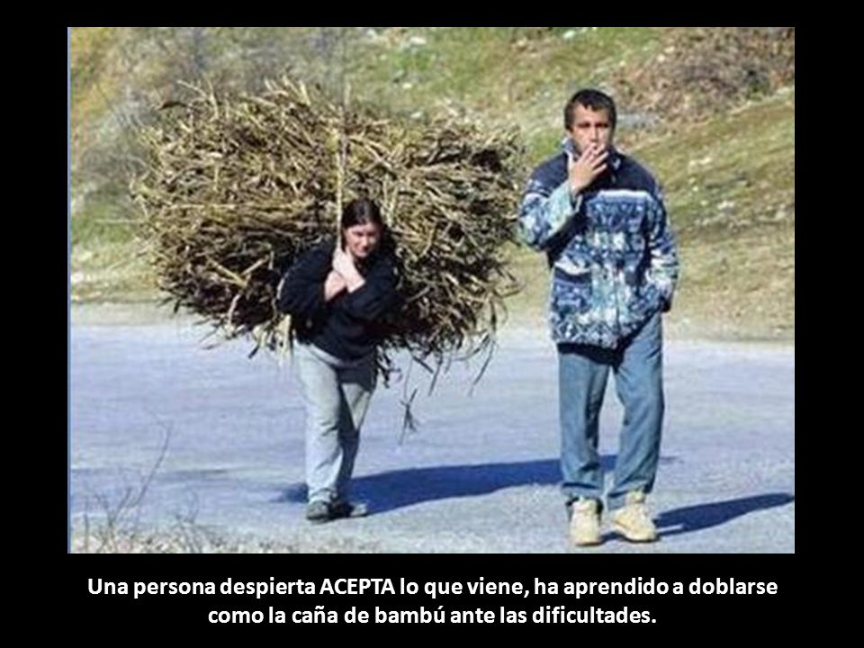 Una persona despierta ACEPTA lo que viene, ha aprendido a doblarse como la caña de bambú ante las dificultades.