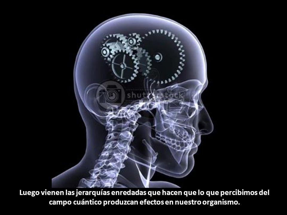 Luego vienen las jerarquías enredadas que hacen que lo que percibimos del campo cuántico produzcan efectos en nuestro organismo.