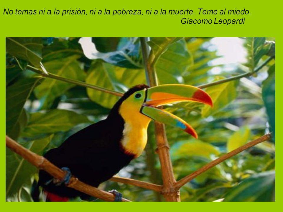 No temas ni a la prisión, ni a la pobreza, ni a la muerte