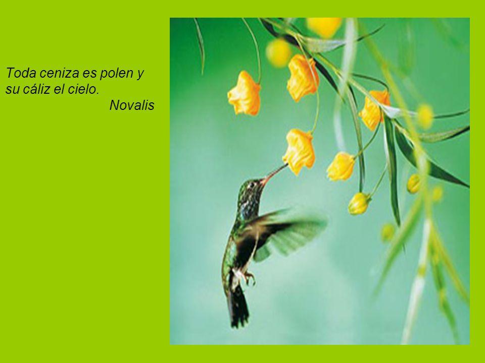 Toda ceniza es polen y su cáliz el cielo. Novalis