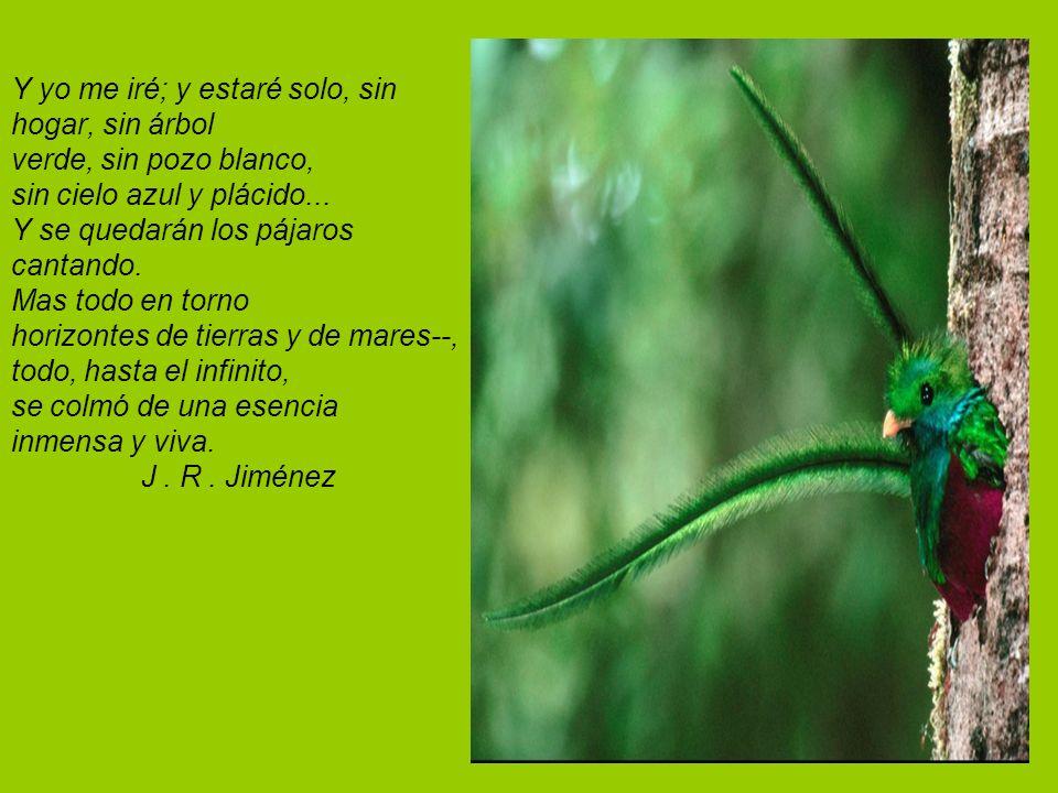 Y yo me iré; y estaré solo, sin hogar, sin árbol verde, sin pozo blanco, sin cielo azul y plácido...