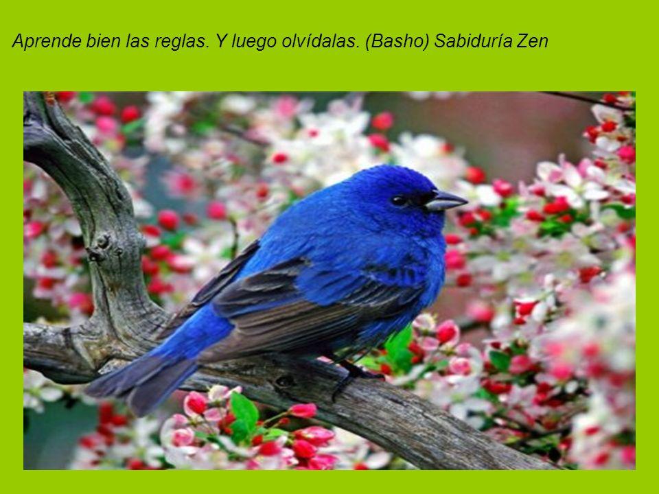 Aprende bien las reglas. Y luego olvídalas. (Basho) Sabiduría Zen