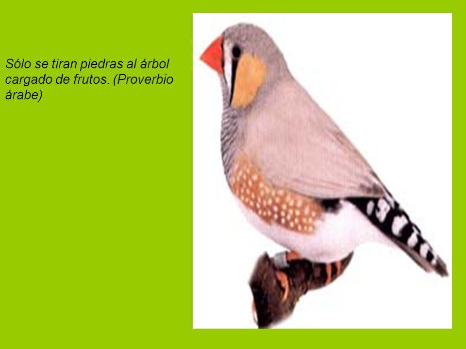 Sólo se tiran piedras al árbol cargado de frutos. (Proverbio árabe)