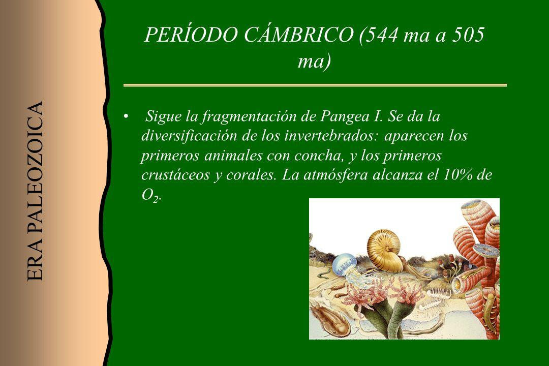 PERÍODO CÁMBRICO (544 ma a 505 ma)