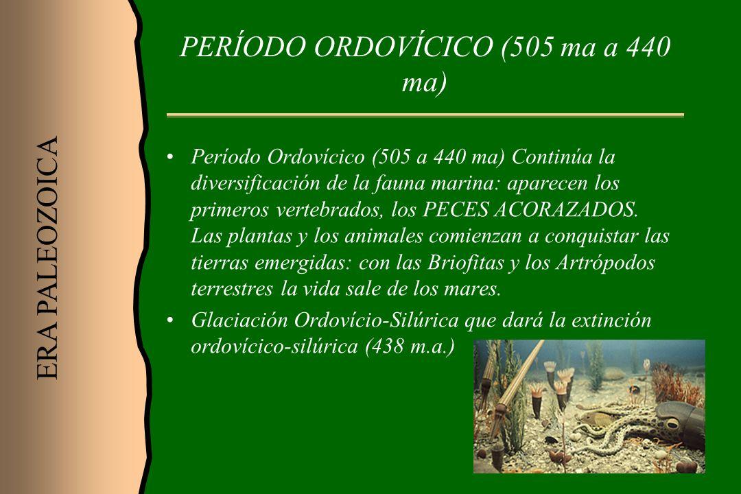 PERÍODO ORDOVÍCICO (505 ma a 440 ma)