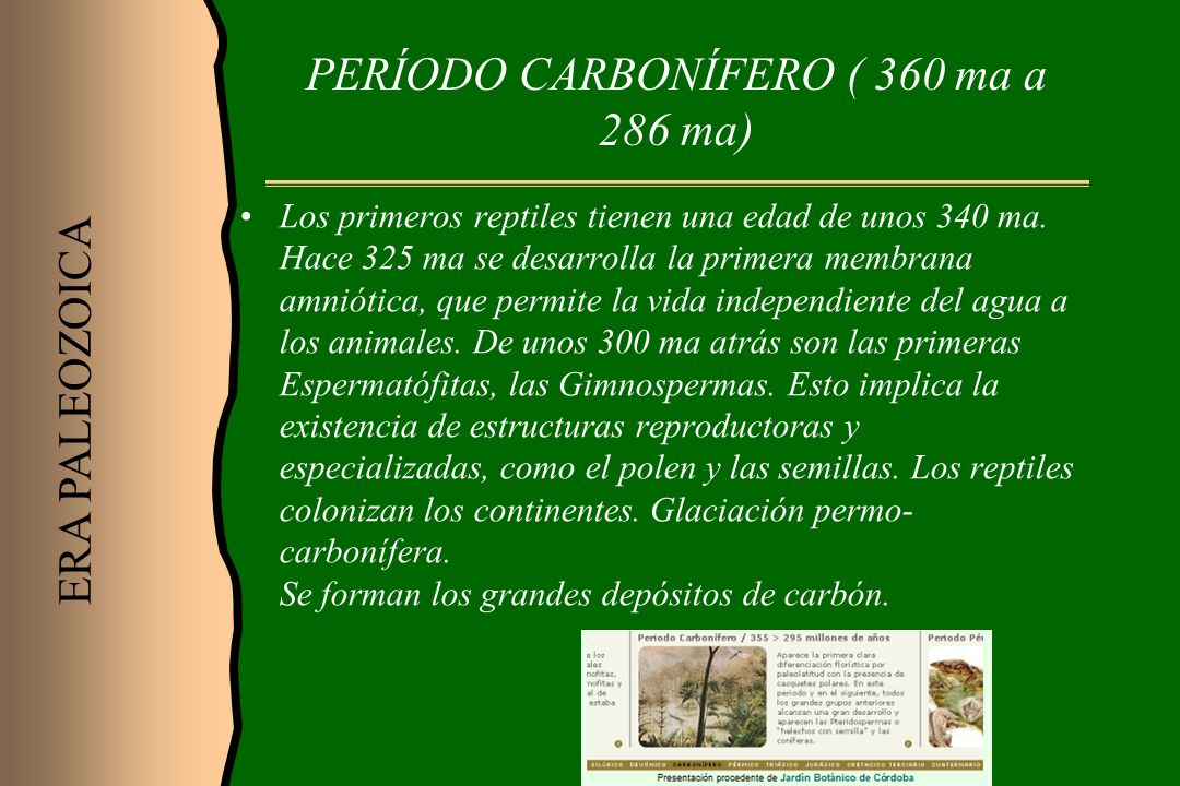 PERÍODO CARBONÍFERO ( 360 ma a 286 ma)