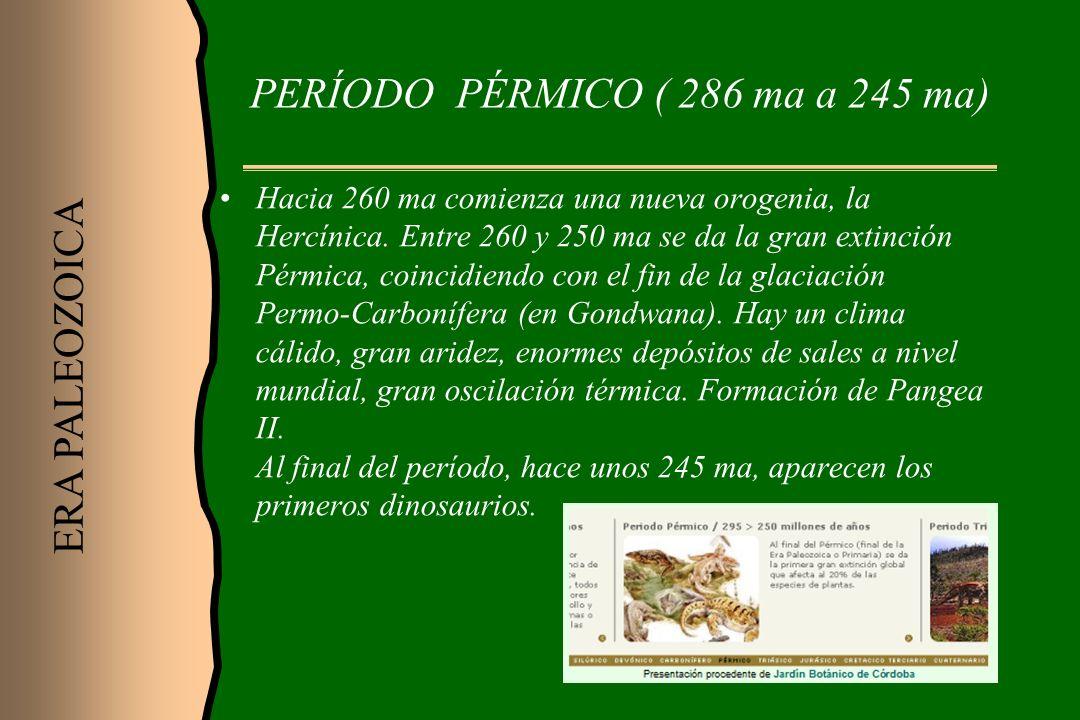PERÍODO PÉRMICO ( 286 ma a 245 ma)