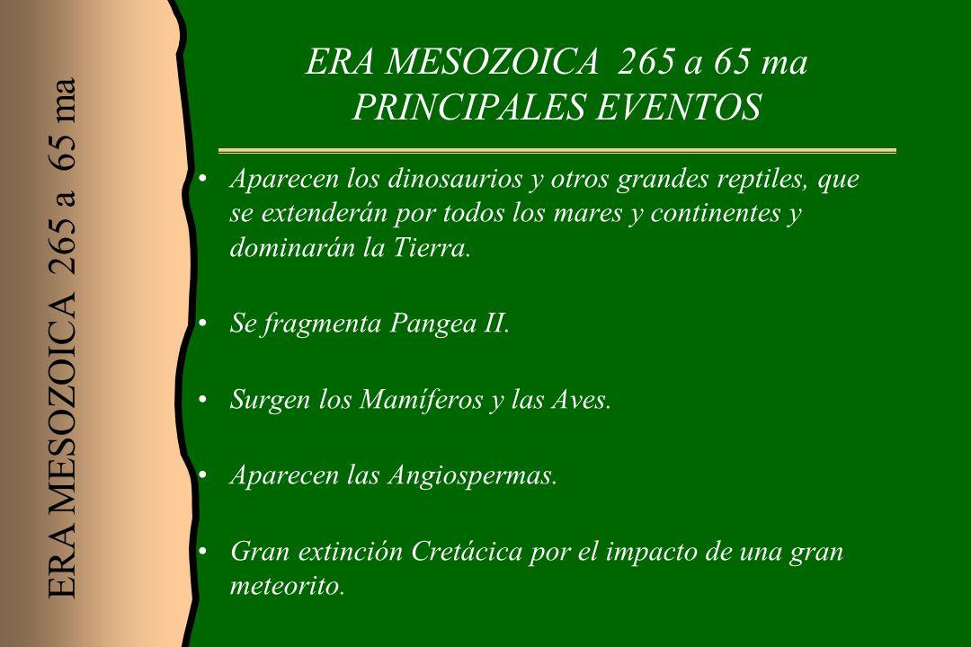 ERA MESOZOICA 265 a 65 ma PRINCIPALES EVENTOS