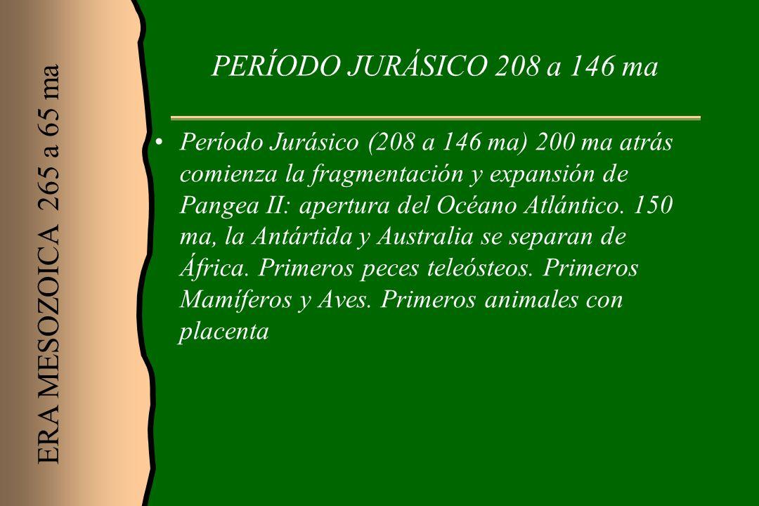 PERÍODO JURÁSICO 208 a 146 ma ERA MESOZOICA 265 a 65 ma