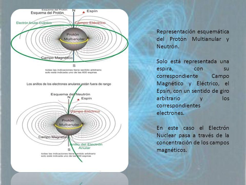 Representación esquemática del Protón Multianular y Neutrón.