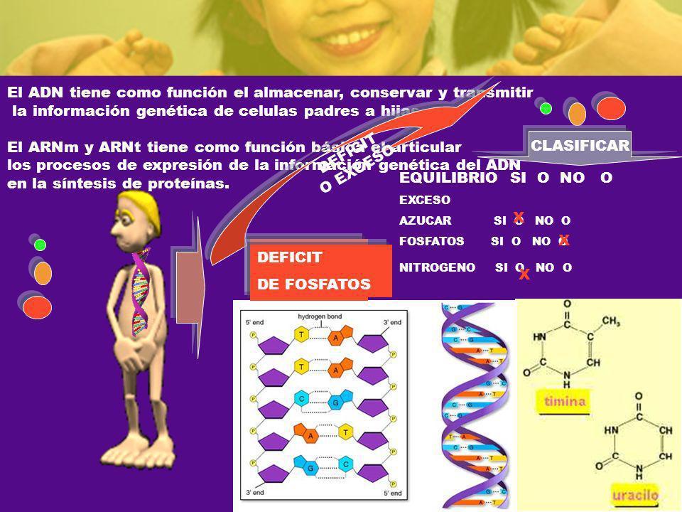 El ADN tiene como función el almacenar, conservar y transmitir
