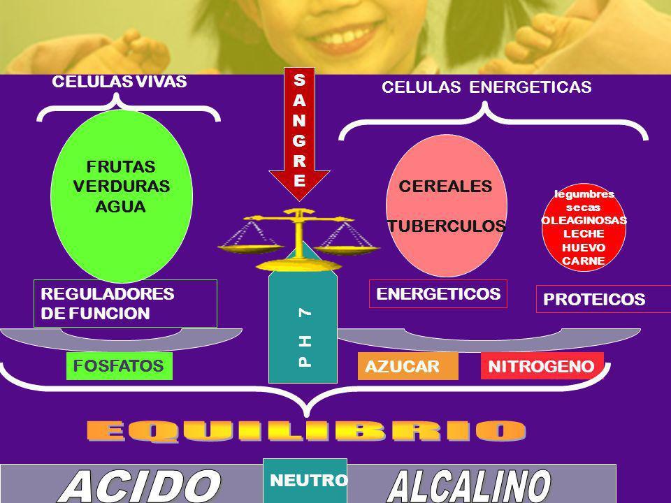 EQUILIBRIO ACIDO ALCALINO CELULAS VIVAS S A N G R E