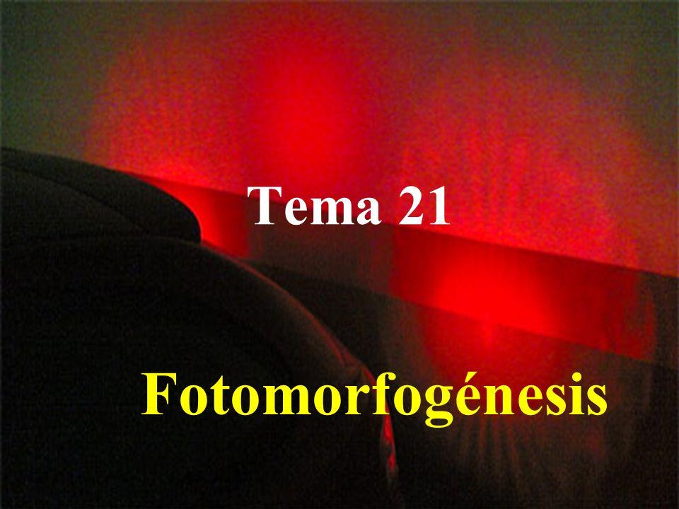 Tema 21 Fotomorfogénesis