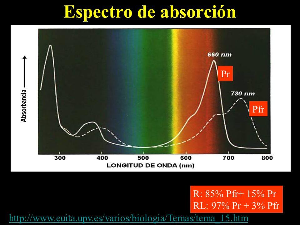 Espectro de absorción Pr Pfr R: 85% Pfr+ 15% Pr RL: 97% Pr + 3% Pfr