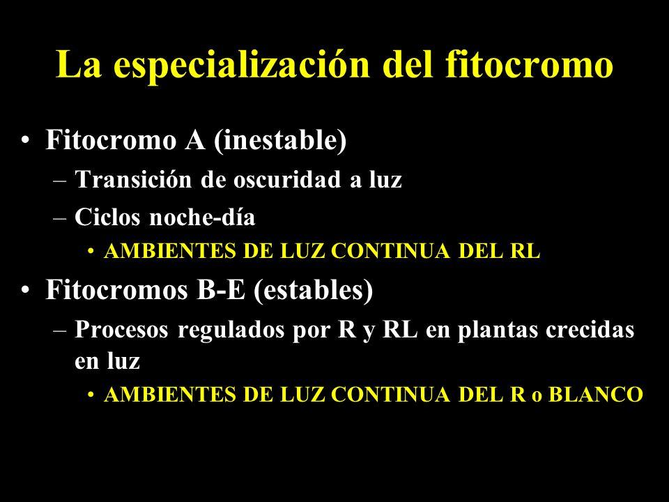 La especialización del fitocromo