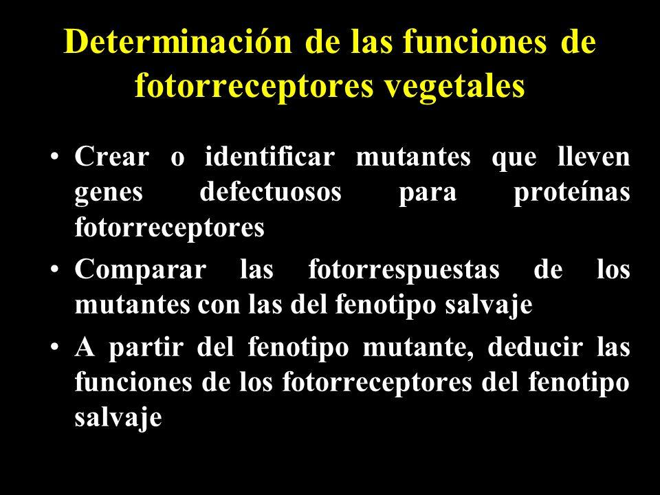 Determinación de las funciones de fotorreceptores vegetales