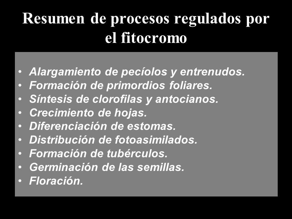 Resumen de procesos regulados por el fitocromo