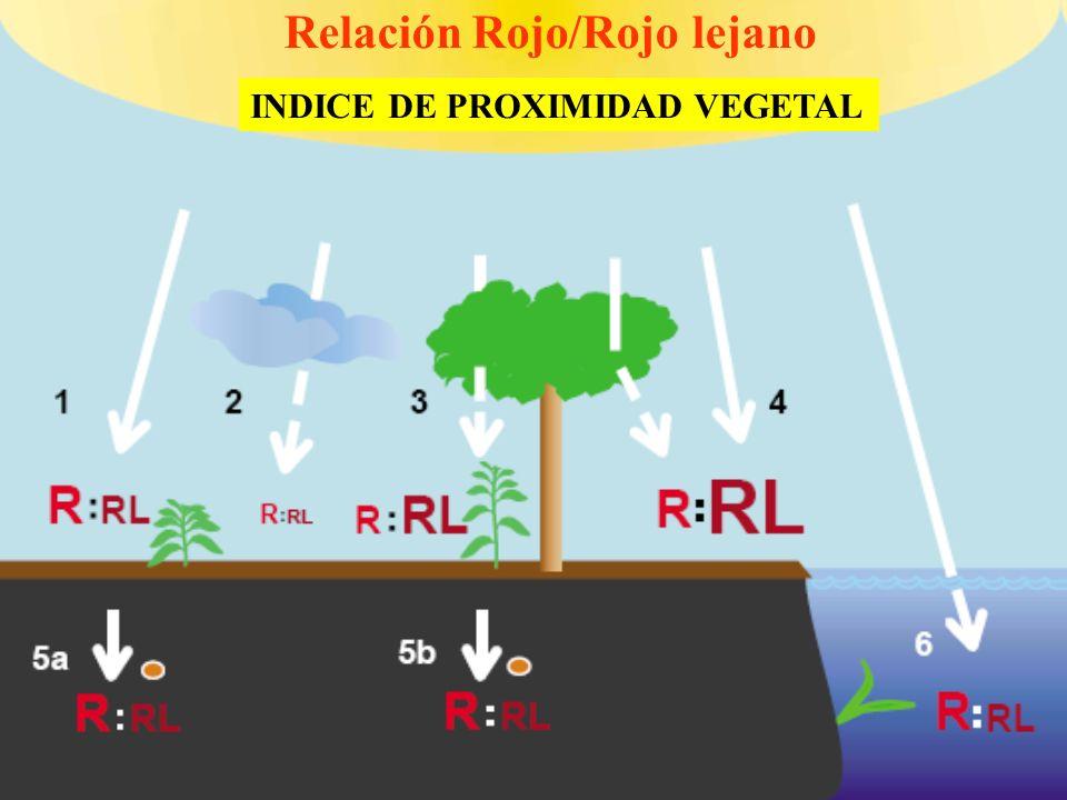 Relación Rojo/Rojo lejano