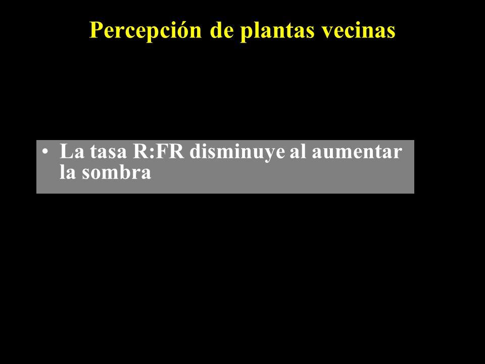 Percepción de plantas vecinas